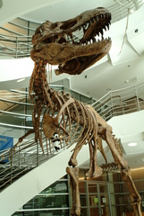 Steve Steve and the T. rex at UCMP